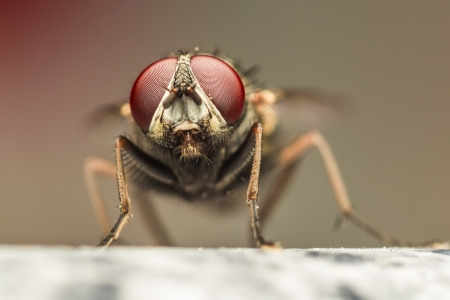 Extreme Detailed Photo Of A Fly s Red Eyes Stock Photo - 18366890