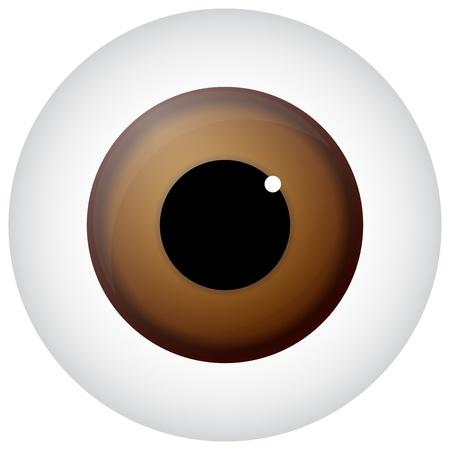 fovea: Hazel Eye Isolated On White Illustration