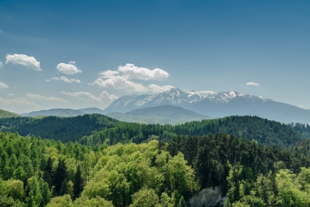 forrest: Carpathian Mountains