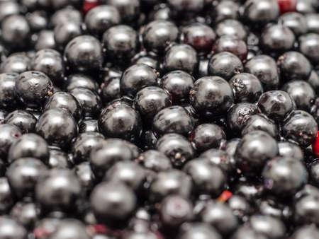bilberries: Bilberries Close Up Background