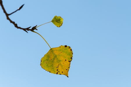 The Last Leaf Of Tree In Late October photo