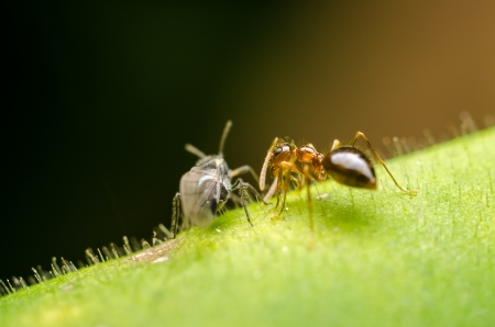 Ant And Small Wasp Making Conversation On A Leaf photo