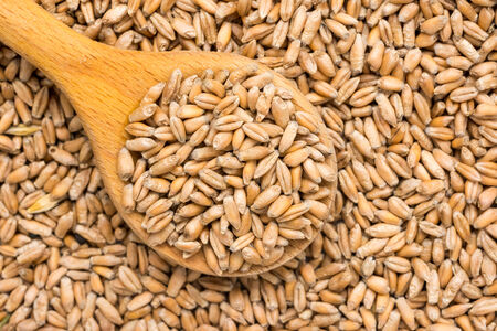 Wooden Spoon Filled With Wheat Seeds photo