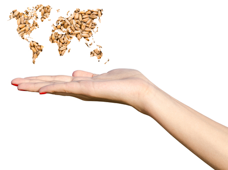 Girl Hand Holding World Map Wheat Grains Isolated On White photo