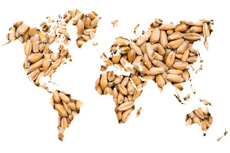 World Map Wheat Grains Isolated On White photo