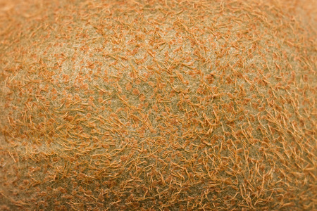 キウイ フルーツの皮・葉脈のテクスチャ 写真素材