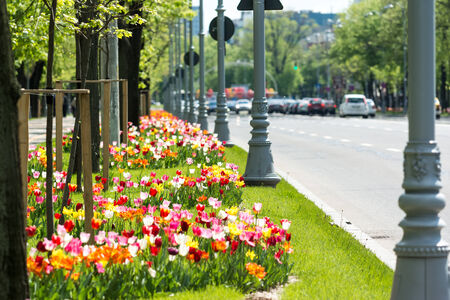 city road: Colorful Tulips Blossom Near City Road