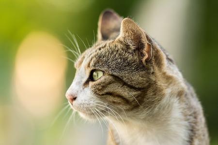 Cute Domestic Cat Profile Portrait photo