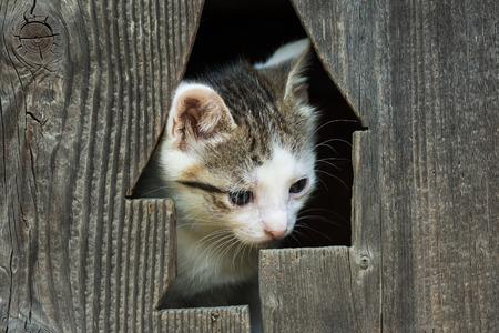kitty cat: Cute Small Baby Kitty Cat Portrait