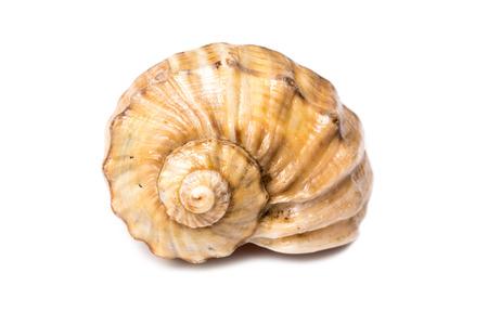 바다 쉘 화이트 절연 스톡 콘텐츠