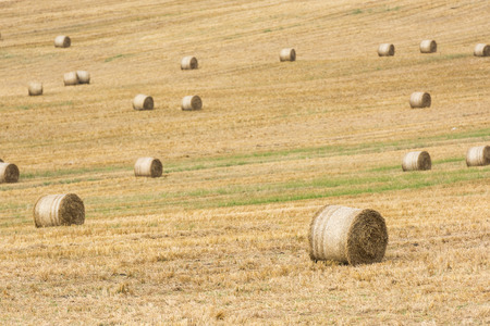 Hay-Roll On Meadow After Harvest On Summer End Landscape photo