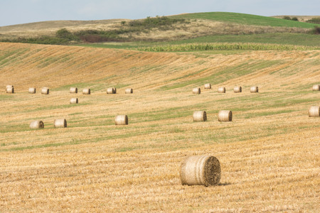hayroll: Hay-Roll On Meadow After Harvest On Summer End Landscape