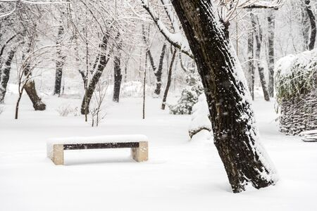 Public Park During Heavy Snowfall In Winter In Bucharest City, Romania. photo