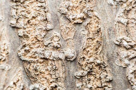 bark background: Tree Bark Background Texture Close Up Stock Photo