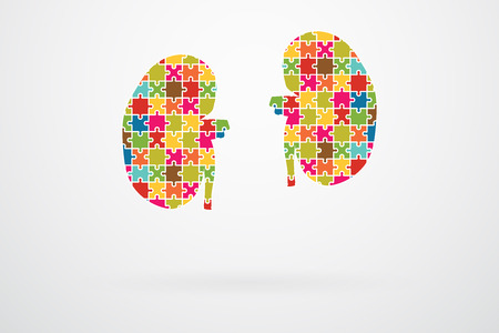 Kidneys Jigsaw Puzzle Pieces Abstract