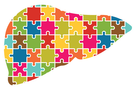 hepatic portal vein: Human Liver Jigsaw Puzzle Pieces Abstract Vector Illustration