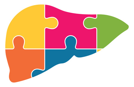 Human Liver Jigsaw Puzzle Pieces Abstract Vector Çizim