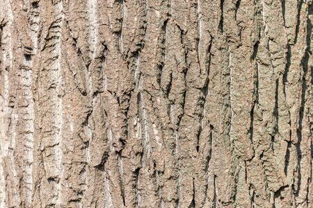 bark background texture: Tree Bark Background Texture Close Up Stock Photo