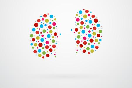 人間の腎臓の抽象的なベクトル