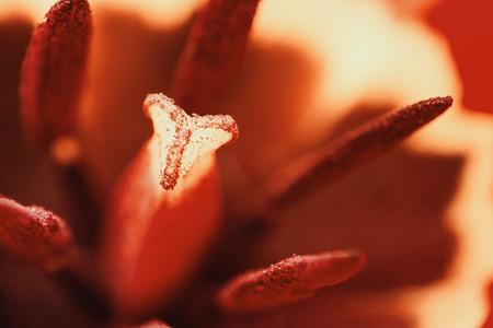 red tulip: Retro Red Tulip Inside Macro In Springtime Stock Photo
