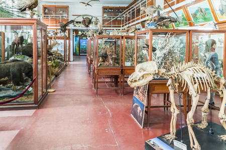 cluj: CLUJ NAPOCA, ROMANIA - APRIL 14, 2015: Interior Of Zoological Museum Of Cluj Was Built In 1859 And Has Now Over 300.000 Species Of Animals, Birds And Insects Displayed.