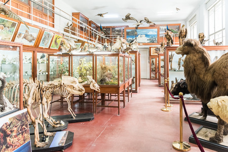 CLUJ NAPOCA, ROMANIA - APRIL 14, 2015: Interior Of Zoological Museum Of Cluj Was Built In 1859 And Has Now Over 300.000 Species Of Animals, Birds And Insects Displayed.