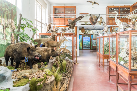 zoological: CLUJ NAPOCA, ROMANIA - APRIL 14, 2015: Interior Of Zoological Museum Of Cluj Was Built In 1859 And Has Now Over 300.000 Species Of Animals, Birds And Insects Displayed.