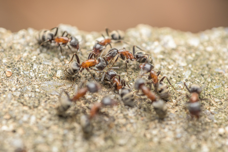 ants: Swarm Of Ants Fights For Food