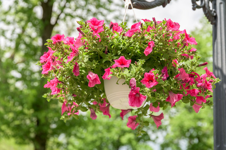 Hanging Basket Flowers Stock Photos And Images 123rf