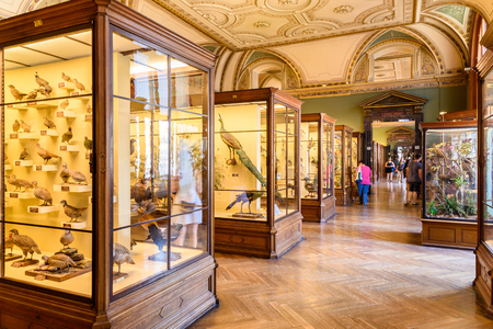 museum visit: VIENNA, AUSTRIA - AUGUST 10, 2015: People Visit The Museum of Natural History Naturhistorisches Museum The Largest Natural History Museum In Vienna.