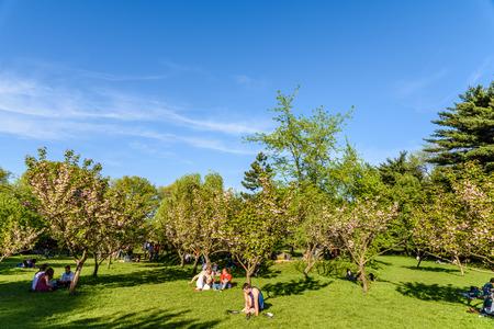 people having fun: BUCHAREST, ROMANIA - APRIL 16, 2016: People Having Fun In The Japanese Garden Of Herastrau Public Park On Weekend Spring Day.