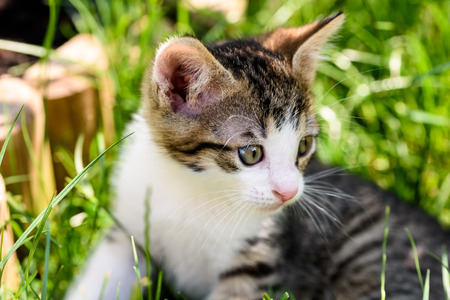 gato jugando: Gato del bebé que juega en hierba