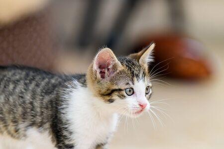 gato jugando: Jugar el gato bebé Foto de archivo