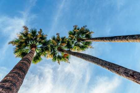 Green Palm Trees On Blue Sky