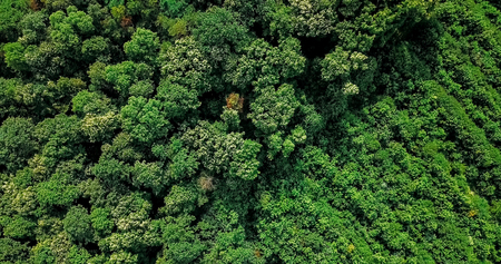 Aerial Drone Flyover View Of Large Green Forest In Summer