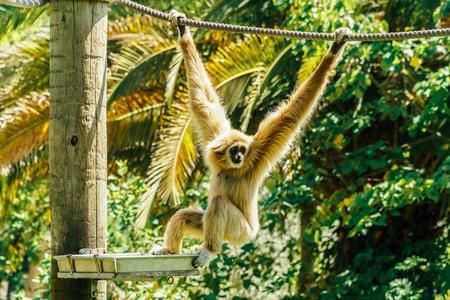 Spider Monkey Portrait Stock Photo