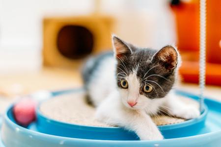 Schattige babykat die thuis speelt Stockfoto