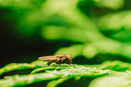Housefly On A Leaf In Garden Stock Photo
