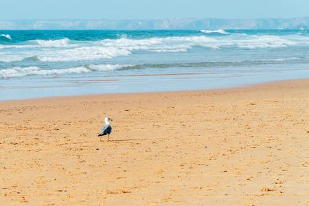 Seagull Walking On Ocean Beach