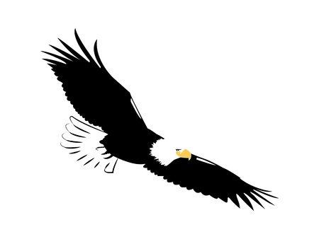 american eagle flying isolated on white for vinyl cut Vector