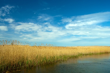 danubian: dry reed landscape in Danube Delta on blue sky with clouds