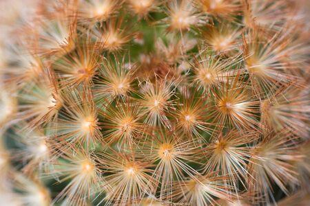 cactus texture photo