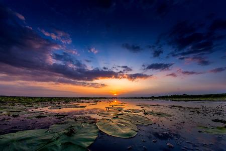 danube delta: Sunset in Danube Delta
