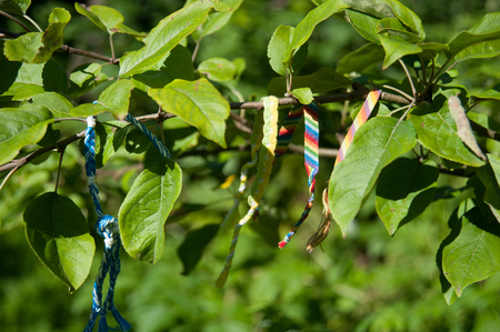 many colored: many colored bracelets from threads on a tree branch