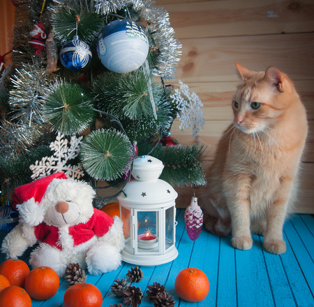 red cat: red cat under the Christmas tree with tangerines Stock Photo