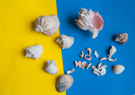 many shells lie on yellow and blue paper