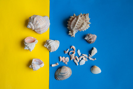shells lie on colored paper Stock Photo