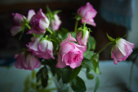 pink roses wither in a vase on a dark background