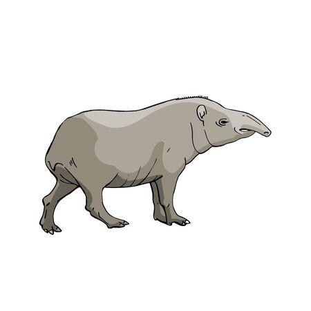 Tapir Hand drawing sketch on white background Illustration