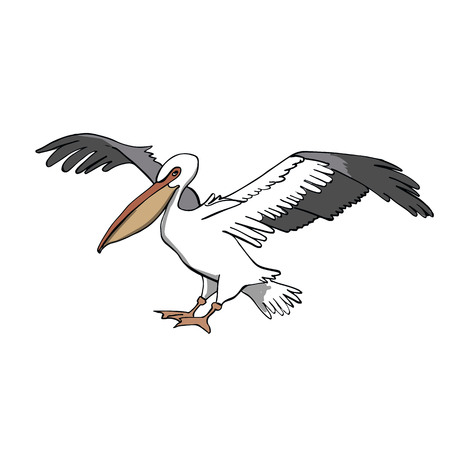 Pelican  Hand drawing sketch on white background.